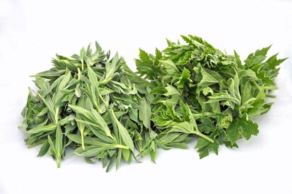 Sclopet (Silene vulgaris) e Panace o Verzéna (Heracleum sphondylium)