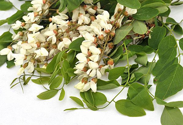 Robinia pseudoacacia, i fiori sono commestibili!