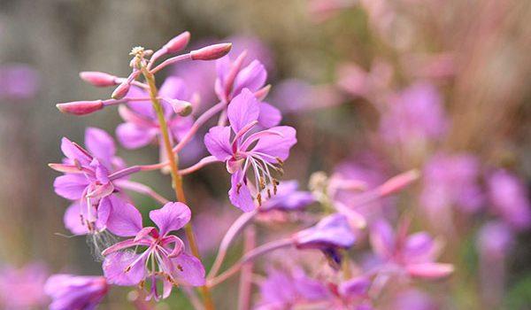 Tempo di fiori commestibili