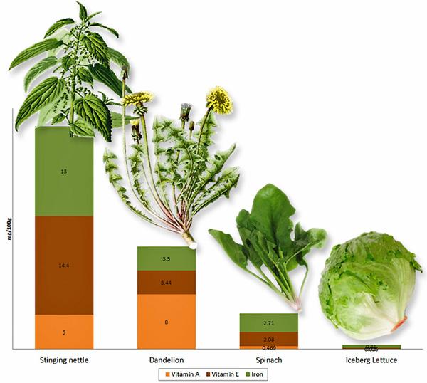 nettle_lettuce