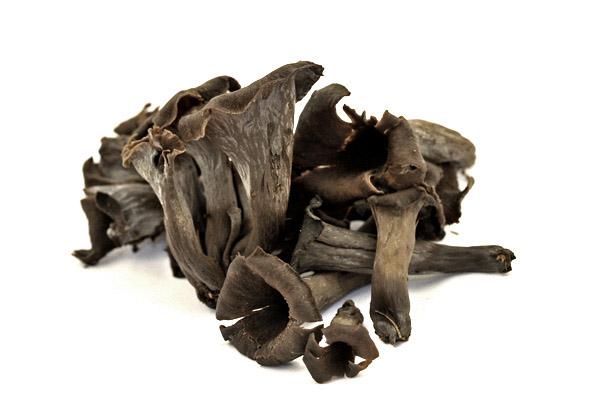 Craterellus cornucopioides, Horn of Plenty, Black chanterelle, Black trumpet, Trompette de la mort