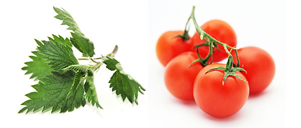 Two taste allies: Nettle, distinctive taste + tomato, for umami taste